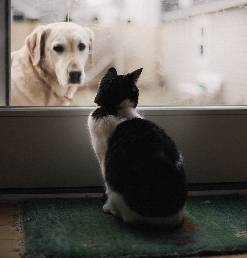 Cat and dog saparated with window door