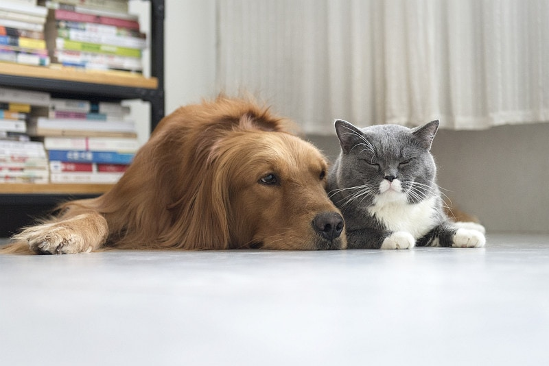 Cat and dog laying close together