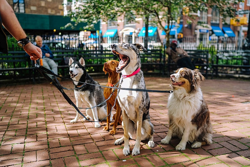 Four different dog breeds on the leash in the park