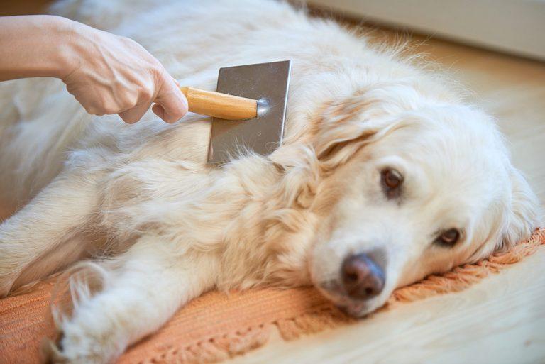 Golden Retriever Dog Metal Grooming Brush