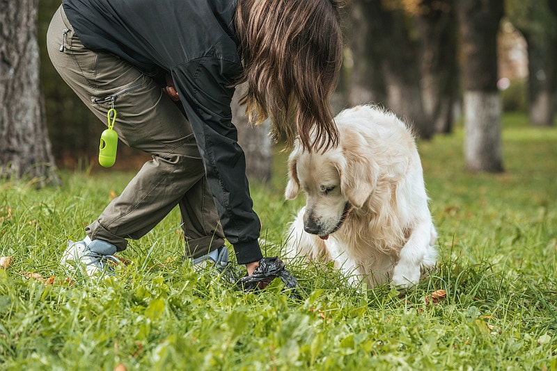 Young woman cleaning after dog in park