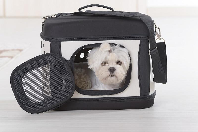 Maltese dog in black and white soft dog carrier