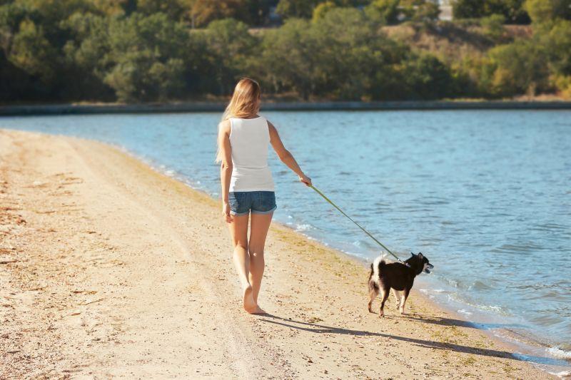 Woman with cute little Shiba Inu dog at lakeside