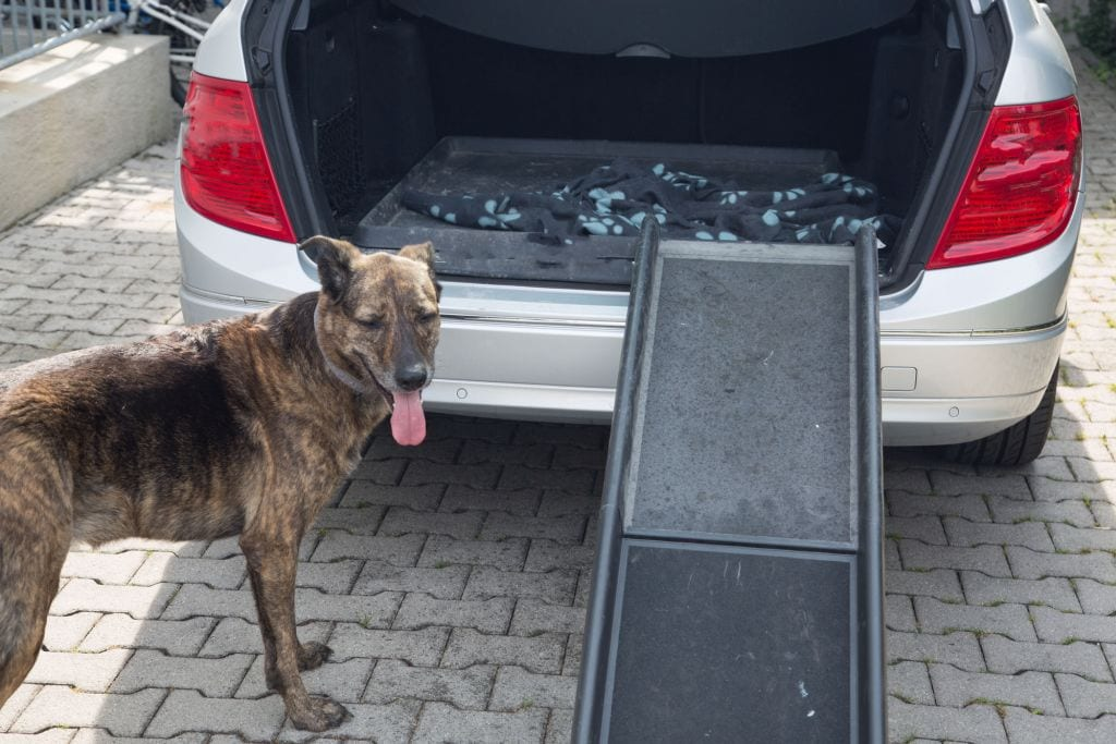 The Best Dog Ramps for SUVs and Trucks in 2020 (Buying Guide & Reviews)