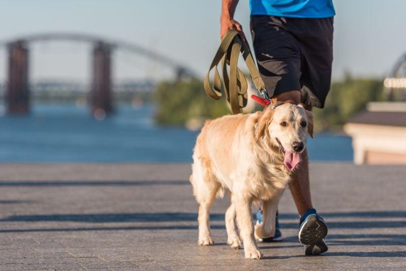 Sportsman walking with dog
