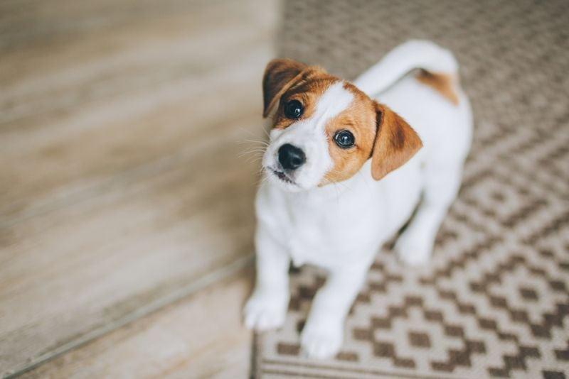 Portrait of a little dog.