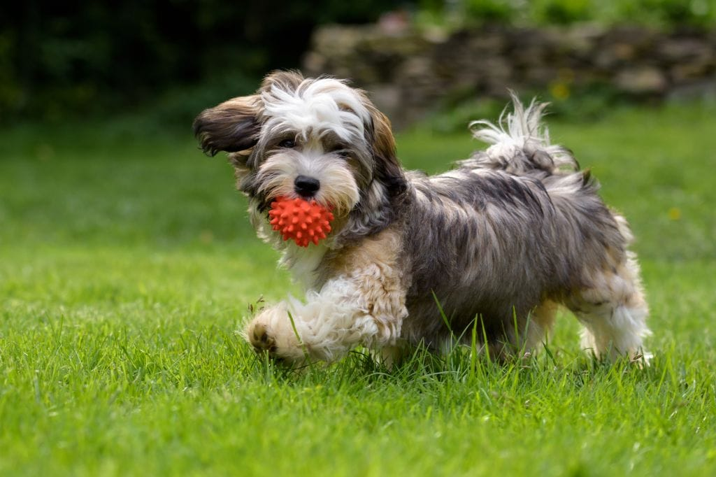 Best Dog Balls in 2020 (Reviews)