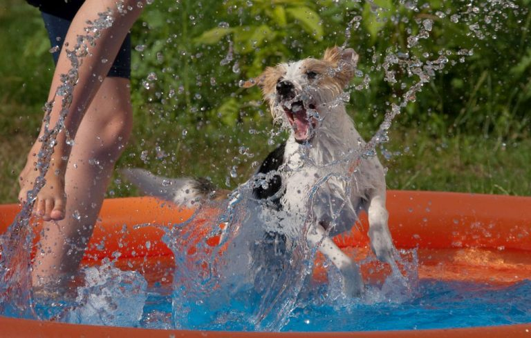 Dog playing in dog pool