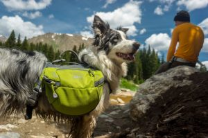 Dog Hiking in Mountains with Owner
