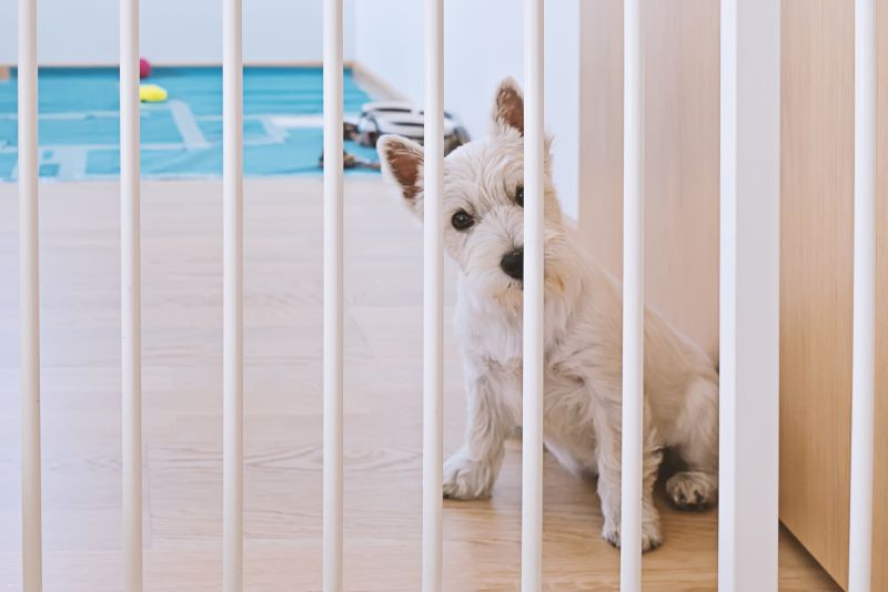 Cute white terrier puppy sitting behind dog fence