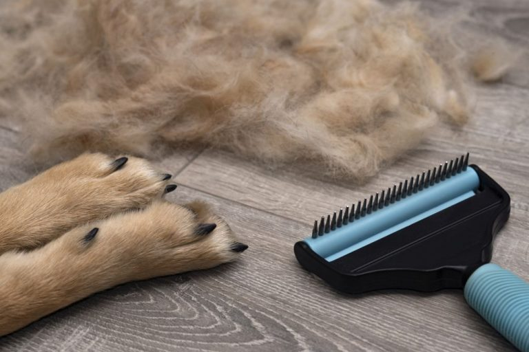 Seasonal molting dogs. Grooming and care for dog.