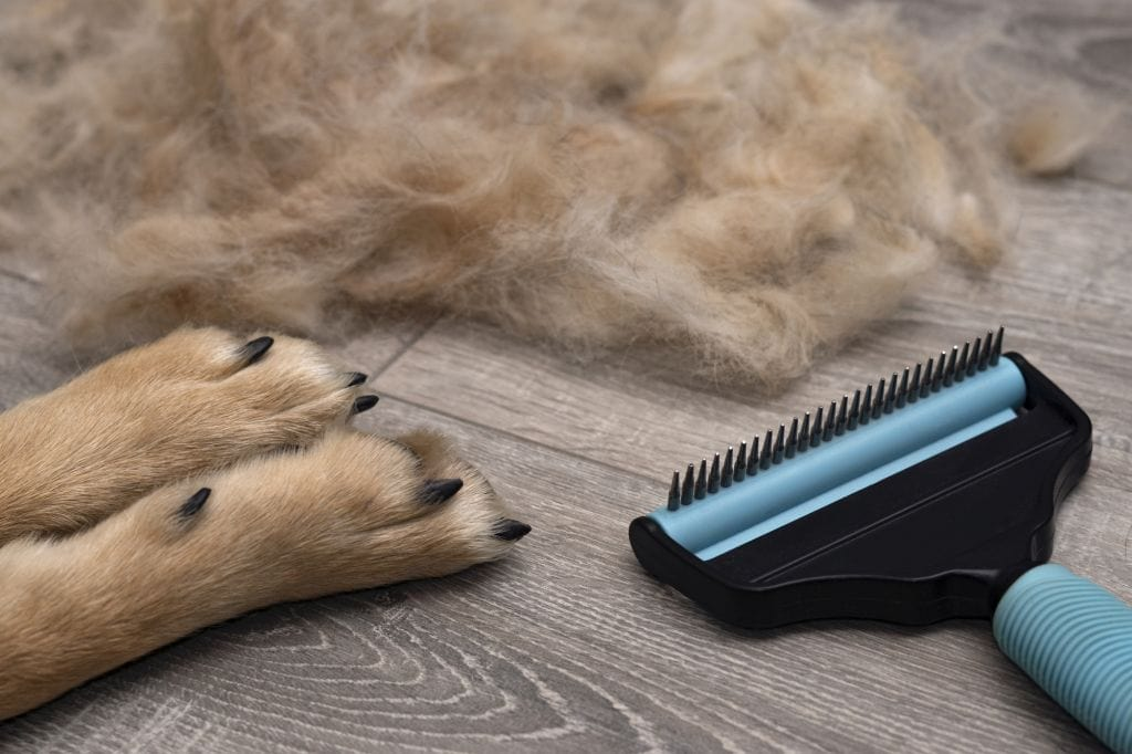 6 Best Grooming Brushes for German Shepherds (Reviews & Buying Guide)